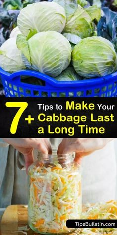 How long does cabbage last? Store green or red cabbage in the fridge for 2 weeks or freeze cabbage in an airtight container for 4 weeks. Cabbage leaves are packed full of vitamin C, and tasty prepared as coleslaw or pickled for long term storage. Cabbage Head, Green Cabbage, Cabbage Leaves, Freezing Cabbage, Cooked Cabbage, Cabbage Rolls Recipe, Cabbage Recipes, Potato Recipes, Vegetable Recipes