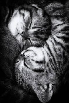 Photographic Print: Yin and Yang by Andrea Jancova : 24x16in