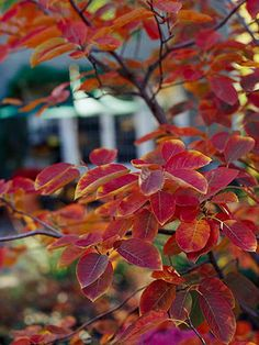 Serviceberry.  Zones 2-9.  Part Sun / Shade.  Something to enjoy each season!  Blooms in spring, has edible berries in summer to enjoy or attract birds with, turns a beautiful red in fall.