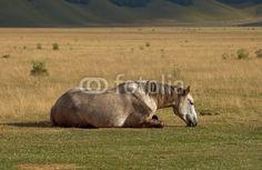 Il riposo del cavallo - The rest of the horse © Pietro D'Antonio