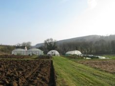 From farm to fork: March -              From the end of February an increase in day length and light levels have led to much more rapid growth of salad and herbs in the tunnel here at Trill Farm.  #Food #Health #Farming