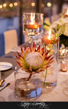 Wedding Venues South Africa Farms Studs Ideas For 2019 Lighted Centerpieces, Simple Wedding Centerpieces, Flower Centerpieces, Flower Decorations, Wedding Decorations, Table Decorations, Centerpiece Ideas, Protea Centerpiece, Protea Wedding