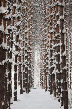 Arboles en invierno