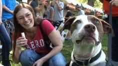Best Friends Animal Society Utah's Strut Your Mutt in Salt Lake City