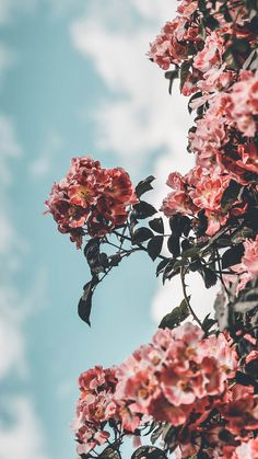 12 Floral iPhone Xs Wallpapers To Celebrate Spring | Preppy Wallpapers