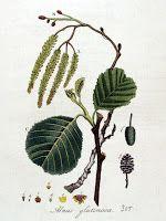 Gombamánia: Éger és gombái Plant Leaves, Plants, Plant, Planets