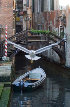 Bird, Boat & Canal in Venice, Italy.  Go to www.YourTravelVideos.com or just click on photo for home videos and much more on sites like this.