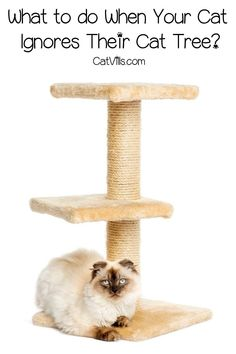 Feeling frustrated because your cat ignores their cat tree after you spent so much money on it? Check out our guide on what to do! Cat Gym, Feeling Frustrated, Curious Creatures, Pet Care Tips, How Do I Get, Pet Health, Guinea Pigs, Fur Babies, Your Pet