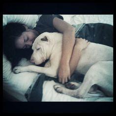 Pitbulls...are love.