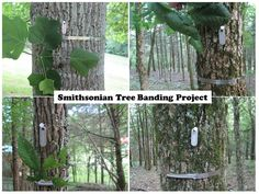 Half-a-Hundred Acre Wood tells about Smithsonian Tree Banding Project.