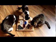 ▶ Meine Katzen und das Fummelbrett - YouTube