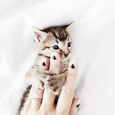 """JEN GOTCH on Instagram: """"Thought I'd hit you up with some nail inspiration (and a kitten, duh) cause this week's #bandotodolist is !!! Get'er Done."""""""