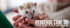 Welcome to Hedgehog Care 101 – Your Pet Hedgehog Guide