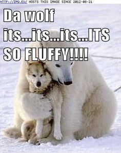 BLOG-SEPT-20-funny-animal-captions-animal-capshunz-i-will-hug-him-and-squeeze-him-and-call-him-george.jpg (378×480)