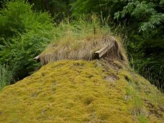 Moss covered thatch roof.