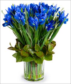 New Growth Designs Iris Bouquet: Dutch Iris artificial flower stems permanently bloom in a beautiful blue! Two dozen flowers are arranged with green Galax leaves in our 6