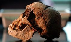 The skull of the Flores 'Hobbit', unearthed in 2004 Photograph:   /Beawiharta Beawiharta/Reuters