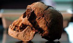 The skull of the Flo