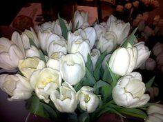 Pope John Paul II tulips / tulipany Jan Paweł II