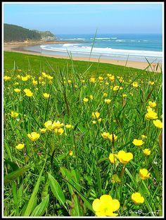 Oyambre Beach, Cantabria (Spain). Bilbao, Valence, Summertime, Madrid, Photo And Video, Beach, Plants, Life, Sun