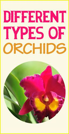 A list of different types of orchids along with a description. #orchid #flower #types #ideas