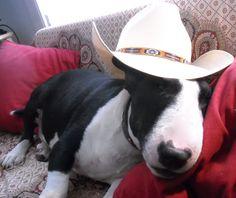 Batu has gone country.  He loves Nashville.