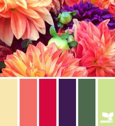 flora palette by design seeds Colour Pallette, Color Palate, Colour Schemes, Color Combos, Color Patterns, Green Palette, Design Seeds, World Of Color, Color Swatches