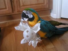 Large parrot foraging toy - DIY