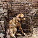 Petition · Please sign! United Nations: Sanction S. Korea for horrific cruelty of dog meat trade! · Change.org