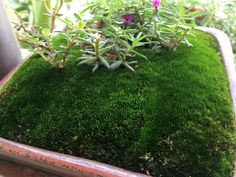#Moss collection:Perfect green