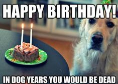 Memes have taken over the world. Browse our collection of happy birthday memes with funny cats, dogs and cute animals. Cute Dog Memes, Funny Animal Memes, Funny Dogs, Cute Dogs, Funny Animals, Funny Wuotes, Funniest Animals, Funny Memes, Hilarious Jokes