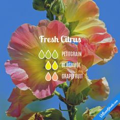 Fresh Citrus - Essential Oil Diffuser Blend