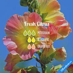 Fresh Citrus - Essential Oil Diffuser Blend