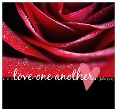 Bible verse: Love one another. John 15:17