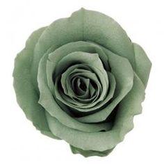 FL0100-42 Standard Rose / Mist Green