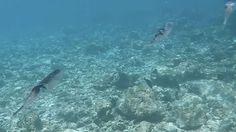 #звезды #темникова https://scontent.cdninstagram.com/t50.2886-16/17288984_705808649592820_6741260666415349760_n.mp4💦Как оказалось, поймать кальмара в воде довольно не просто🙅🏻. Космическая красота.🦑🐙🐟🐠 #maldives #gopro #gopro5 #stregismaldives   lenatemnikovaofficial