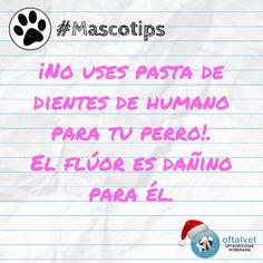#Mascotips ¡No uses pasta de dientes de humano... - Hospital Veterinario Oftalvet