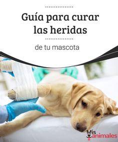 Guía para curar las heridas de tu mascota Aprende en el blog de Mis Animales esta guía para curar las heridas en tu mascota y que viva sana y feliz siempre a tu lado. #heridas #curar #mascota #alimentación