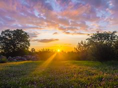 Brilliant Sunrise with rays of light hitting wildflowers this morning from my backyard in Redding California. [OC][30002250] #reddit