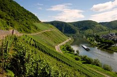 Approximate number of calories burned walking vineyards in Germany's Mosel region for  half an hour: 185.