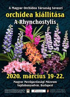 Orchidea és Bromélia Kiállítás 2020 Vajdahunyadvár Budapest - Programturizmus Budapest, Tarot, Plants, Plant, Planets, Tarot Cards