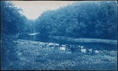 Bronx River, 1885 Bronx, NY