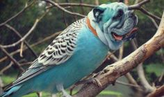 That's a strange budgie-Dirds Are So Cool