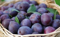 Download wallpapers plums, fruit, harvest, plate with plums