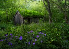 Overgrown (Norway) by Haakon Nygaard on 500px
