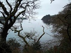 Written in 1941, Frenchman's Creek will draw you away from Fowey to Helford Passage in Mawnan Smith.  This is approximately one hour away from us by car, but certainly warrants an expedition. A pitstop at the Ferryboat Inn will fuel you for an excursion up Helford River to Frenchman's Creek. Make a note of tide times, as the creek can be inaccessible during low tides.