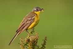 bird-photography-08