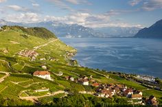 At acres, Lavaux is the largest contiguous wine region in Switzerland. Places To Travel, Travel Destinations, Places To Visit, European Vacation, European Travel, Wine Enthusiast Magazine, Swiss Travel, Pilgrimage, Trip Advisor