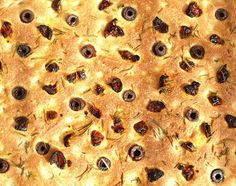 Focaccia - Výzva The Daring Bakers' Bread, Baking, Tortillas, Mince Pies, Brot, Bakken, Breads, Backen, Buns