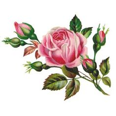 Google Image Result for http://www.clipart-flowers.com/images/clipart/rose.jpg